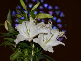 Easter flower by Ted Yannello.